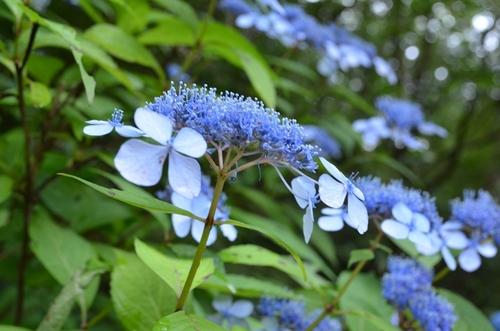 森林植物園7月-1.jpg