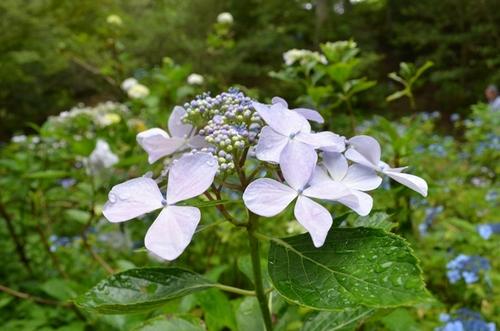 森林植物園7月-4.jpg
