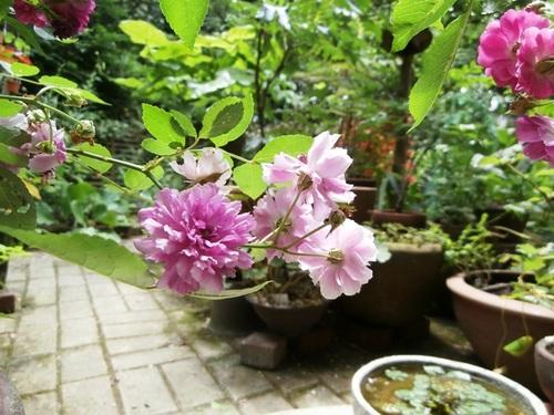 Garden of July-1.jpg