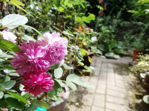 Garden of July-2.jpg